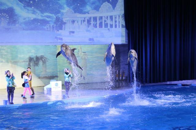 19일 제주 퍼시픽랜드에서 큰돌고래 태지(가운데)와 큰돌고래 아랑이, 수족관에서 태어난 혼종돌고래 바다가 공연을 하고 있다. 핫핑크돌핀스 제공