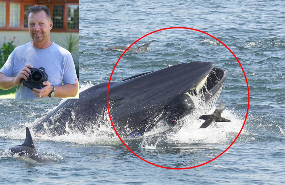 잠수부 집어삼킨 고래 포착'현대판 요나' 구사일생[코사무이콘래드|어벤저스 토토]