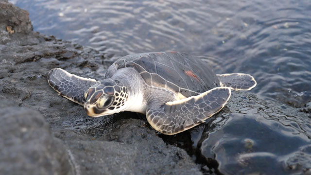 바닷가 바위에 있는 바다거북