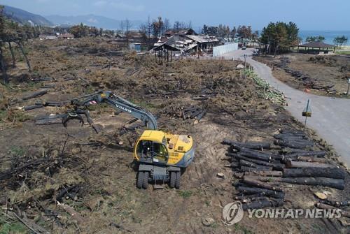강원 산불로 불에 탄 삼림[연합뉴스 자료사진]