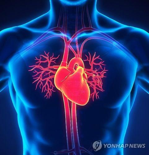 심혈관계(일러스트) [게티이미지뱅크 제공]