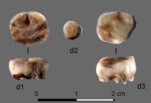 젖니 2개가 밝혀준 멸종 '고대 북시베리아인' 존재[올스포 토토|마추자  토토]