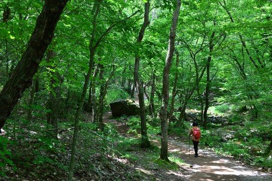 선운사에서 도솔암으로 이어지는 오솔길은 나무가 울창해 여름에도 시원하다. [사진 한국관광공사]