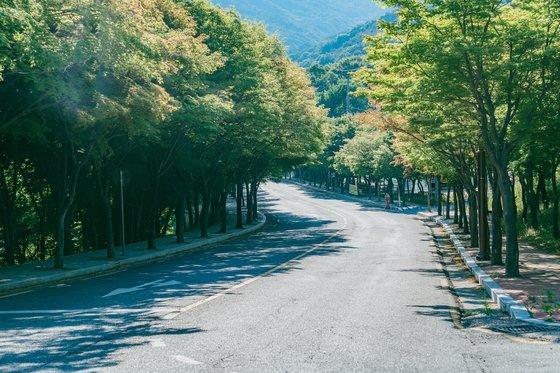 팔공산 순환도로 가로수길. 벚나무와 단풍나무가 터널을 이루고 있어 사계절 아름답다. [사진 한국관광공사]