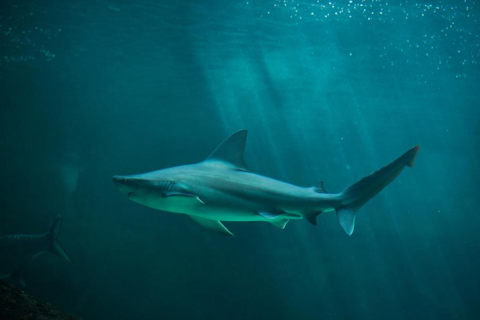 누가 상어를 제주 앞바다로 불렀나[바다께임|아스 토토]