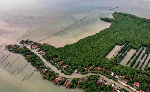 인도네시아 드막의 맹그로브숲 마을 [안타라통신]