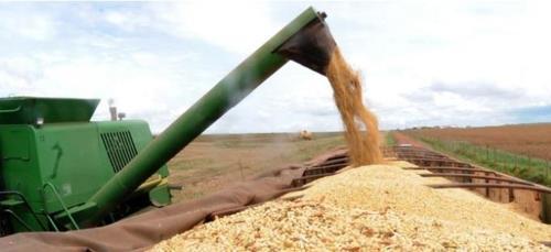 브라질의 농산물 수확량이 2년 만에 증가세로 돌아설 것으로 보인다 [국영 뉴스통신 아젠시아 브라질] [2019.01.11 송고]