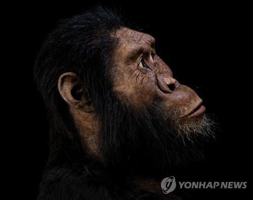 약 380만년 전 화석으로 복원한 오스트랄로피테쿠스 시조 A.아나멘시스 [AFP/클리블랜드 자연사박물관/매트 크로우=