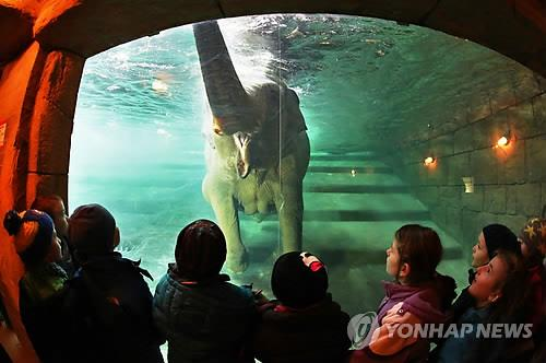 독일의 한 동물원에서 수영하고 있는 코끼리 [EPA=연합뉴스]