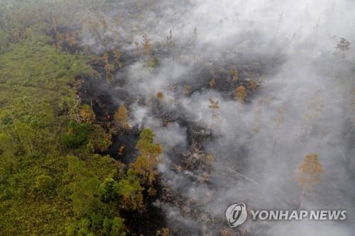 인도네시아 중앙 칼리만탄(보르네오섬)의 화재 현장 [로이터=연합뉴스]