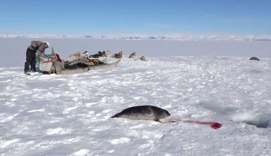 북극에는 원주민인 '이누이트'들이 아직도 사냥을 하면서 살고 있습니다. [사진=유튜브 화면캡처]