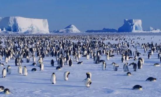 남극의 대표 동물인 펭귄은 아프리카에서 건너온 조류들이 극한의 추위에서 살아남기 위해 진화한 것입니다. [사진=유튜브 화면캡처]