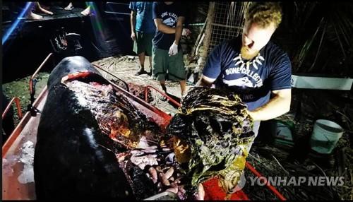 """""""고래 뱃속에 이런 쓰레기가"""" (하노이=연합뉴스) 지난 15일 필리핀 해안에서 숨진 채 발견된 고래 뱃속에서 플라스틱 쓰레기가 40㎏이나 나왔다. 사진은 이 고래를 해부한 해양생물학자 대럴 블래츌리 박사가 쓰레기를 꺼내는 모습. 2019.3.19 [페이스북 캡처·재판매 및 DB 금지] youngkyu@yna.co.kr"""