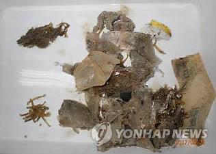 붉은바다거북 장기에서 발견된 해양쓰레기 [국립해양생물자원관 제공·재판매 및 DB 금지