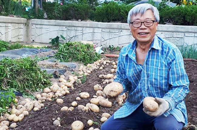 이동필 전 농림축산식품부 장관이 지난 7월 고향인 경북 의성의 텃밭에서 감자를 수확하고 있다. /이동필 전 장관 페이스북