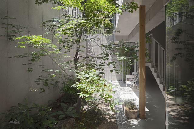 지하 1층에도 단풍나무와 허브를 심어 공간에 활기를 더했다. 지하 1층이지만 빛이 잘 들도록 설계했다. 김주영(studio millionroses) 건축사진작가
