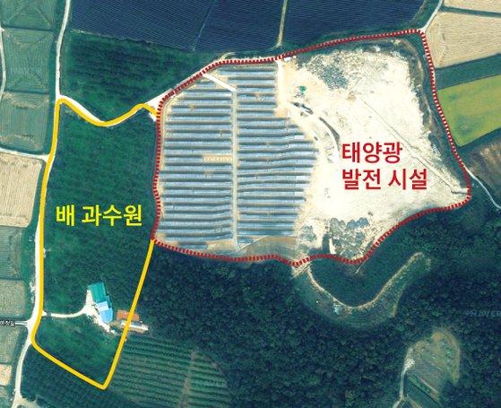 12일 네이버 지도(위성사진)로 본 최씨 배 과수원과 인근의 태양광발전 시설. 그래픽=김주원 기자 zoom@joongang.co.kr
