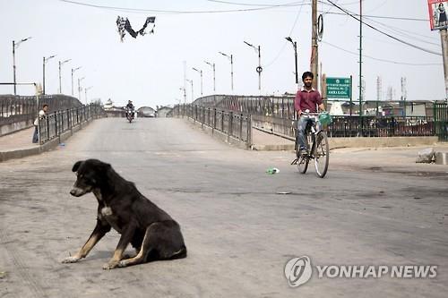 인도의 떠돌이 개. [AP=연합뉴스]