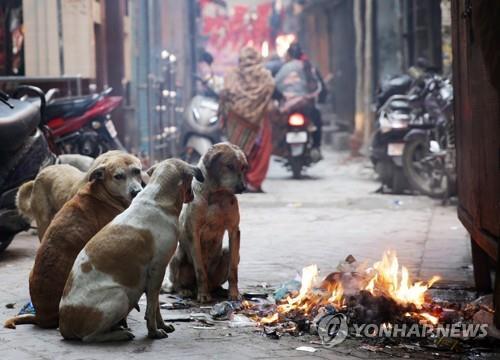 모닥불 가에 모여있는 인도의 떠돌이 개들. [EPA=연합뉴스]