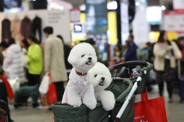 강아지 관련 사진. 사진=연합뉴스