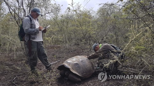 갈라파고스에서 거북이 살피는 탐험대 [AP=연합뉴스]