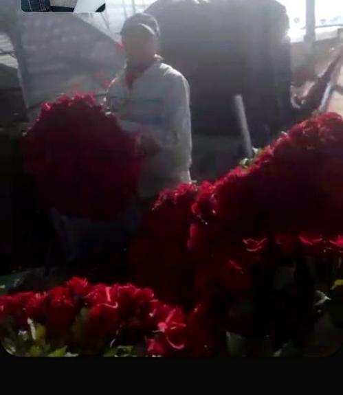 강 씨가 농가에서 폐기할 꽃을 옮기는 모습을 영상통화로 보여주고 있다. [농민 강재희 씨 제공. DB 및 재판매 금지]