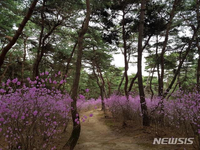 [서울=뉴시스] 여주 영릉.(사진=문화재청 제공) 2020.4.27 photo@newsis.com