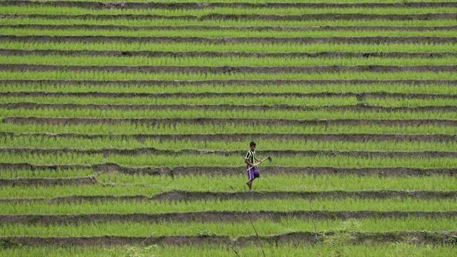 한 남성이 미얀마 카친수비군 본거지인 샨주의 한 계단식 농장에서 작업하고 있다. EPA 연합뉴스
