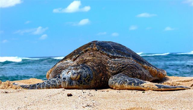 지구온난화로 인한 기후변화 속도는 바닷속이 육상보다 4배나 빠르다. 이 같은 기후변화의 압력은 바다거북 같은 생물의 생존을 위협한다. 이 때문에 육상, 해상의 많은 동식물들이 기후변화에서 살아남기 위해 현재 거주 지역보다 고위도 지역으로 이동하고 있다는 사실이 밝혀졌다.미국 항공우주국(NASA) 제공