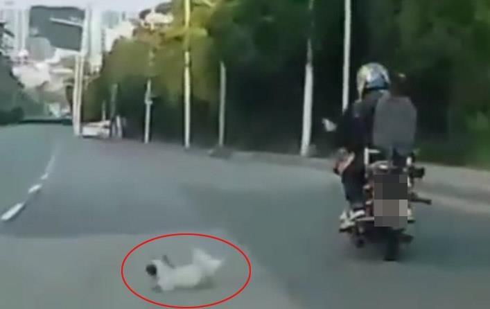 달리던 오토바이서 강아지 추락..동물보호단체 수사 의뢰[템플러? 토토|윈스카지노]