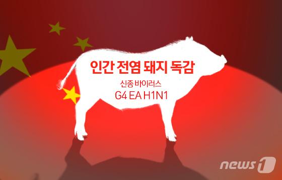 """中 정부 """"새로운 돼지독감 우려 과장됐다..인간 전염 어려워""""[me2 토토 마티니 (짭) 토토]"""