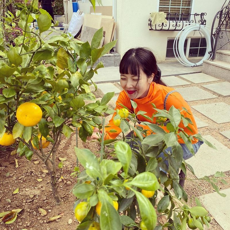 Singer Hyuna showed off her fresh beauty.Hyuna posted several photos to her Instagram on October 14.The photo shows Hyuna picking tangerines.  Hyuna added a touch of freshness with an orange turtleneck T-shirt.  Hyunas vanishing small face catches the eye.Hyuna is in a public relationship with Singer Dunn