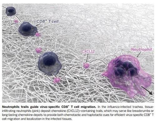 '면역 억제' 류머티즘 환자, 코로나19 감염률 오히려 낮다[독수리 5형제 토토|라스트찬스 토토]