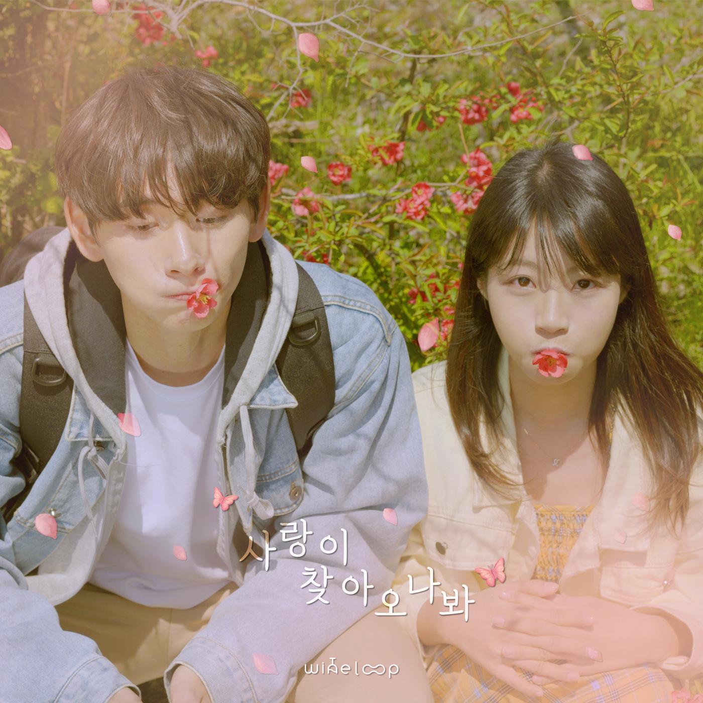 25일(일), 와인루프(Wine Loop) 새 앨범 '사랑이 찾아오나 봐' 발매 | 인스티즈