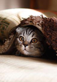 고양이는 참지 않아