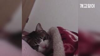 고양이 코~ 자는 시간 Cat sleeping time to say goodbye ASMR