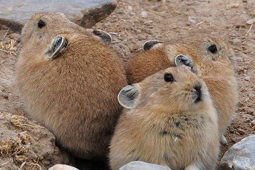 신비하게 생긴 티베트의 동물들