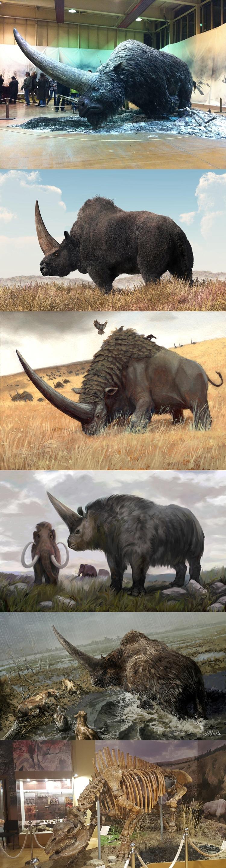 약 39,000년 전에 멸종한 엘라스모테리움