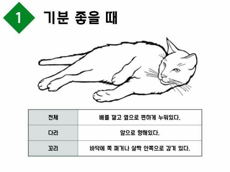 교과서적으로 행복한 고양이