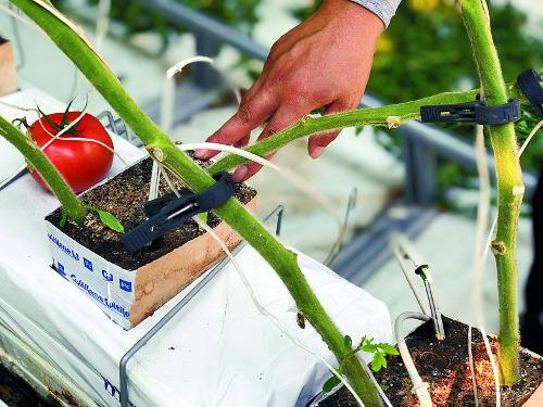 해외여행 가서도 앱으로 원격제어, 토마토 농사도 척척