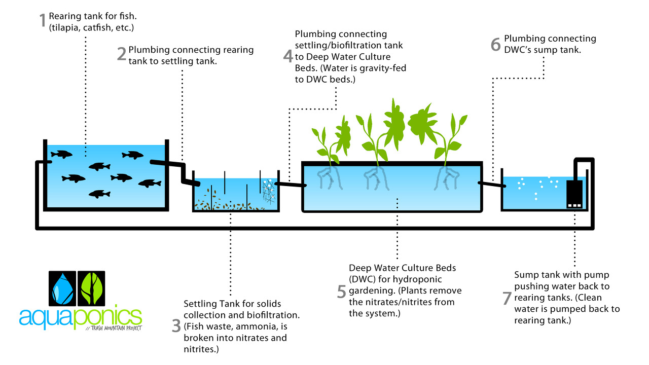Commercial Aquaponics Business Plan Pdf