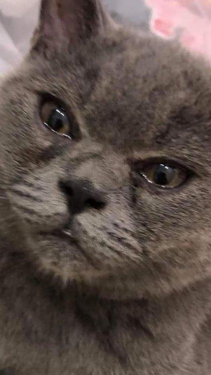 마늘 까는데 안비키고 가만 있는 고양이