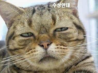 4연패 롯데, 단독 꼴찌 추락했다…한화, 첫 3연전 스윕