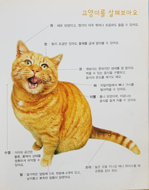 고양이에게 수염이 중요하군요