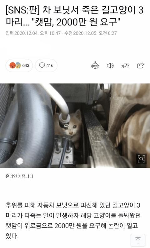 역대급 레전드 캣맘  jpg