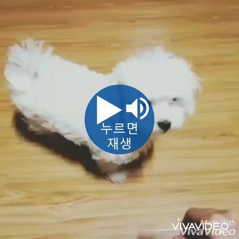 포텐온 강아지 두 마리 왜케 비교되냐 ㅋㅋㅋ