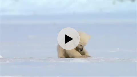 충격적인 백곰들의 실체