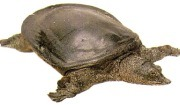 거북과 비슷하게 생긴 자라