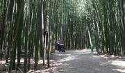 태화강 십리대숲