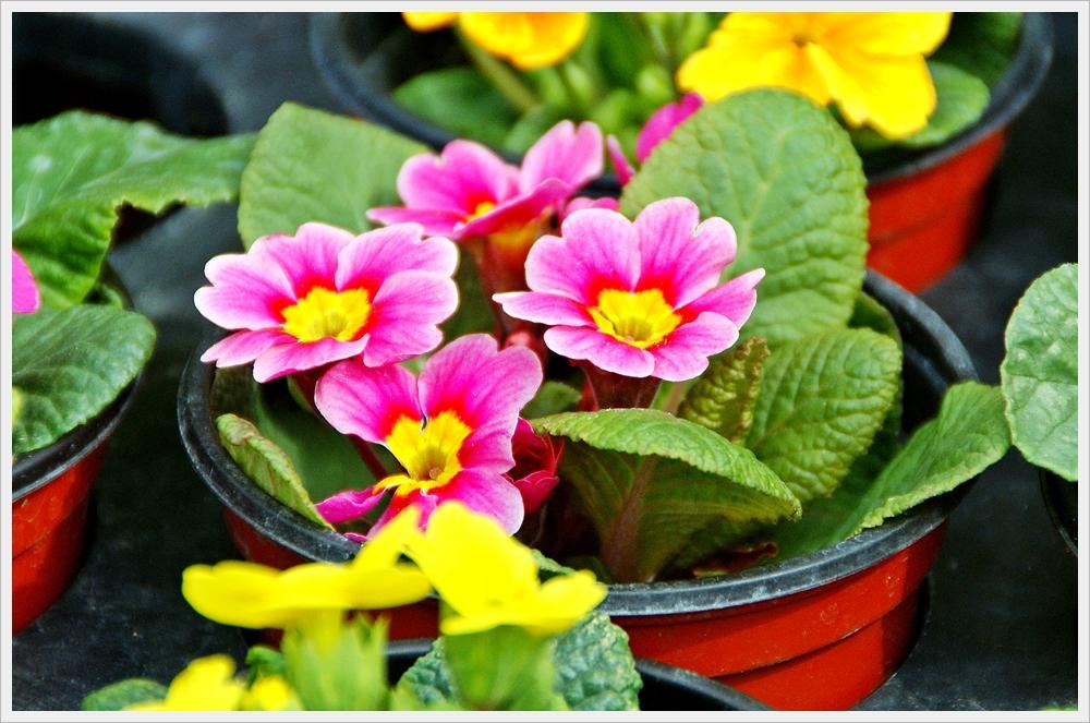 봄꽃사진 Spring fllower